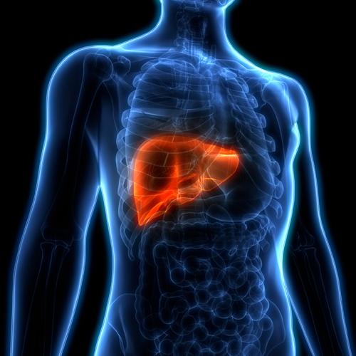 العلاقة بين فقدان الوزن والكبد الدهني الغير كحولي